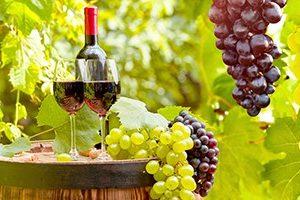 2409 КП Виноград и вино. Фартук для кухни пластиковый. 3 метра