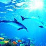 Дельфины 194х136см