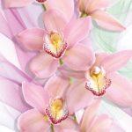 Орхидеи 194х136см