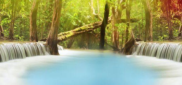 163 Природа, лес. Фартук для кухни МДФ. 2,8 метра