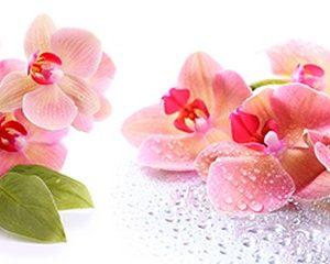 242 Цветы, орхидеи. Фартук для кухни МДФ. 2,8 метра