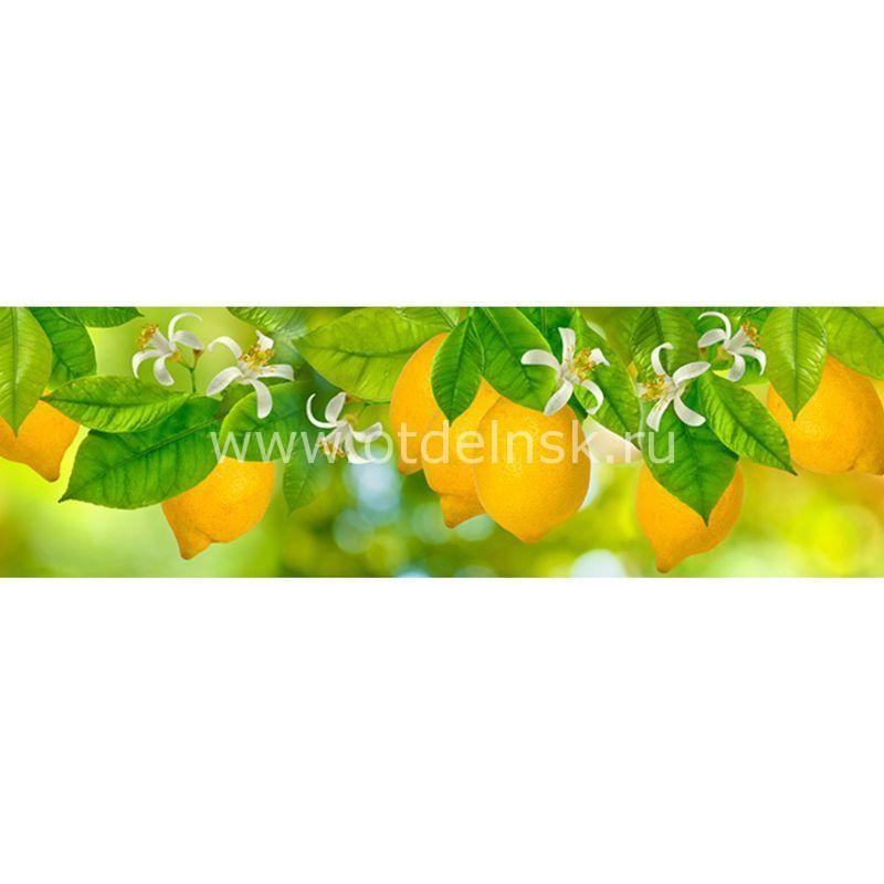456 Лимоны. Фартук для кухни МДФ. 2,8 метра
