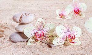 572 Цветы, орхидеи. Фартук для кухни МДФ. 2,8 метра