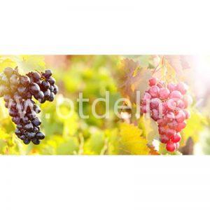 099 Фрукты, виноград. Фартук для кухни МДФ. 2,8 метра