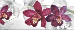 Орхидеи. Фартук для кухни пластиковый. 3 метра