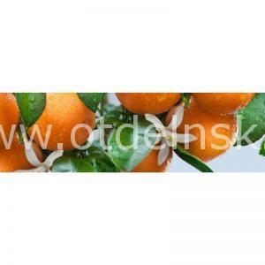Спелые мандарины. Фартук для кухни пластиковый. 3 метра