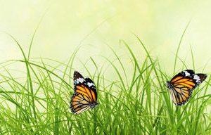 1407 Трава, бабочки. Фартук для кухни МДФ. 2,8 метра