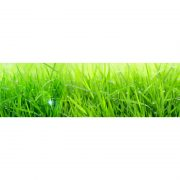 2857 Трава. Фартук для кухни МДФ. 2,8 метра