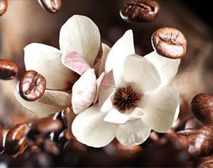 AG 111 Цветки магнолии, кофе. Фартук для кухни МДФ. 2440х610. Толщина 4 мм