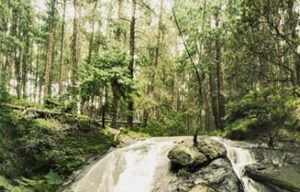 8865 Лес, водопад. Фартук для кухни пластиковый. 3 метра