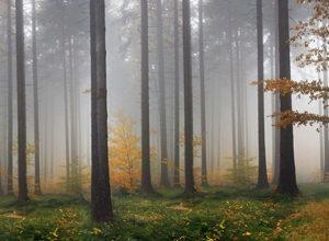 9005 Осенний лес. Фартук для кухни пластиковый. 3 метра
