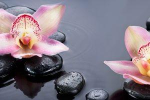 8539 Орхидеи, камни. Фартук для кухни пластиковый. 3 метр