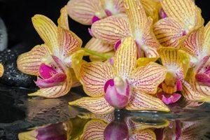 8573 Жёлтые орхидеи. Фартук для кухни пластиковый. 3 метр