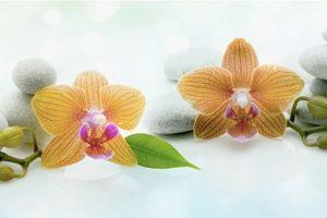 8808 Орхидеи, бамбук. Фартук для кухни пластиковый. 3 метра