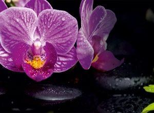9011 Орхидеи, листья. Фартук для кухни пластиковый. 3 метра