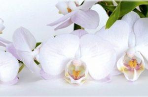 9013 Белые орхидеи. Фартук для кухни пластиковый. 3 метра