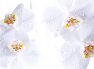 9024 Белые орхидеи. Фартук для кухни пластиковый. 3 метра