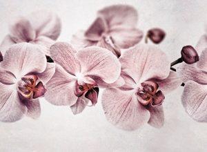 9105 Орхидеи. Фартук для кухни пластиковый. 3 метра