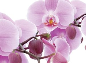 9171 Розовые орхидеи. Фартук для кухни пластиковый. 3 метра