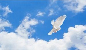 Фартук кухонный из ХДФ. 10566 Птицы в небе.