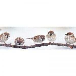 Панель фартук из ХДФ. 10788 Птицы на ветке.