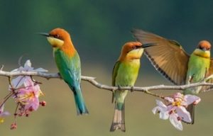 Фартук ХДФ кухонный. 9662 Птицы на ветке.