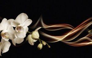 3835 Орхидеи. Фартук для кухни пластиковый. 3 метра