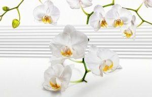 3973 Орхидеи. Фартук для кухни пластиковый. 3 метра